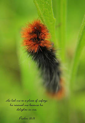 Spring Caterpillar Poster by Tyra  OBryant
