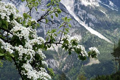 Spring In Alps Poster by Sola Deo Gloria