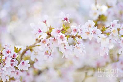 Spring Pastels Poster by Jacky Parker