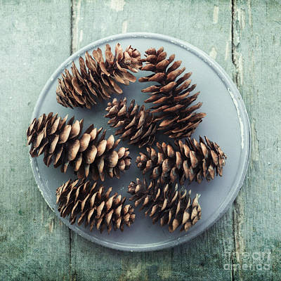 Stil Life With  Seven Pine Cones Poster by Priska Wettstein