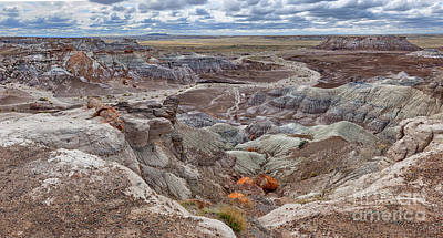 Stormy Morning At Petrified Forest  Poster by Sandra Bronstein