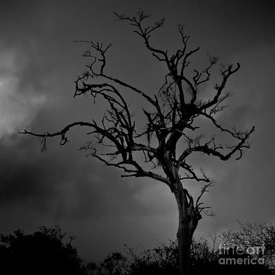 Stormy Tree Poster by Kevin Barske