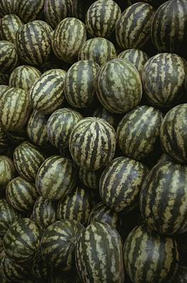Striped Watermelons Poster by Stephen St. John