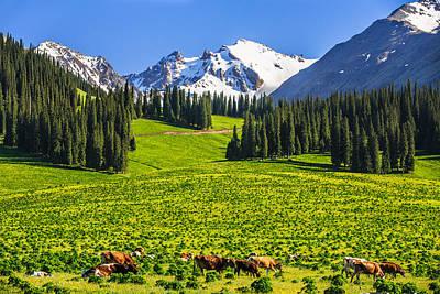 Summer Scenery On Nalati Grassland, Xinjiang China Poster by Feng Wei Photography
