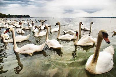 Swans Poster by Okan YILMAZ