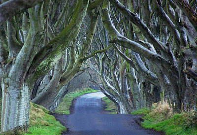 The Dark Hedges. Poster by Martine Maclennan