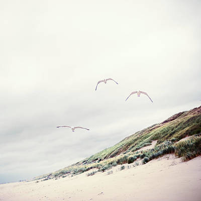 Three Seagulls At Beach Poster by Elisabeth Schmitt