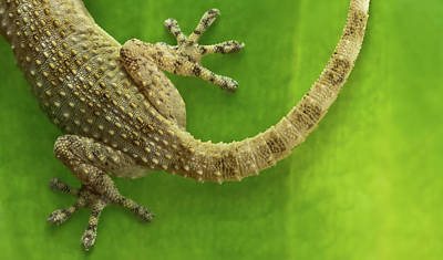 Top Reptile Poster by Izlemus