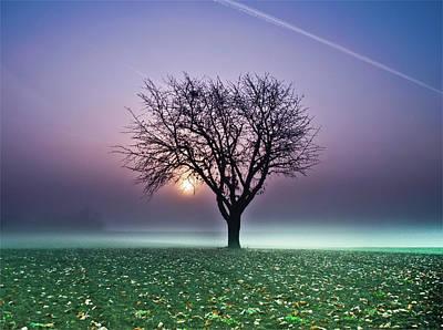 Tree In Field Poster by Ulrich Mueller