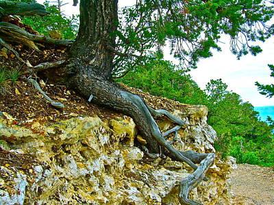 Tree Root Tenacity Poster by Frank SantAgata