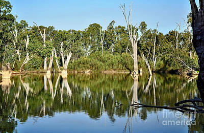 Tree Stumps In The River Poster by Kaye Menner