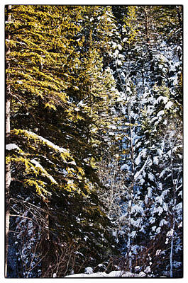 Trees In Taos Village Poster by Lisa  Spencer
