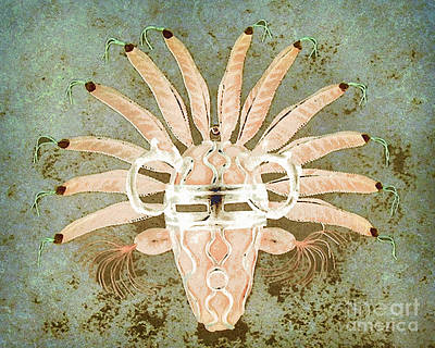 Tribal Mask IIi Poster by Arne Hansen