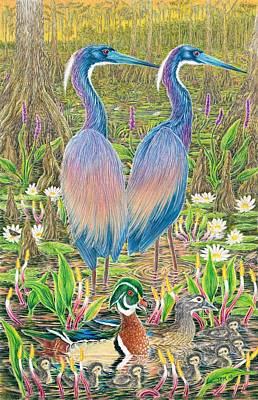Tricolored Herons With Wood Ducks Poster by Tim McCarthy