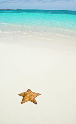 Tropical Beach And Starfish Poster by Mehmed Zelkovic