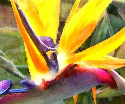 Tropical Bird Of Paradise Poster by Elaine Plesser