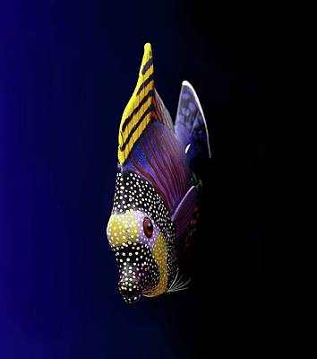 Tropical Fish Poster by Pieceoflace Photography