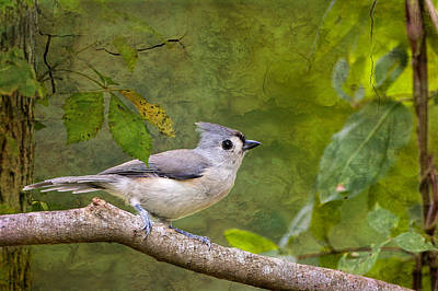 Tufted Titmouse In The Forest Poster by Bonnie Barry