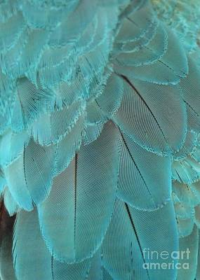 Turquoise Feathers Poster by Sabrina L Ryan