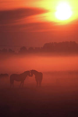 Two Horses At Sunset Poster by John Foxx