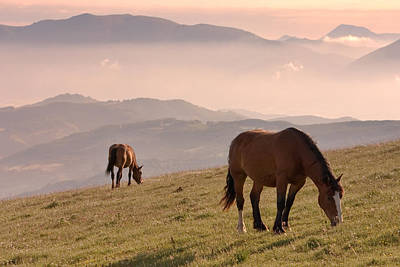 Two Horses Grazing On Mountain Top In Early Mornin Poster by Christiana Stawski