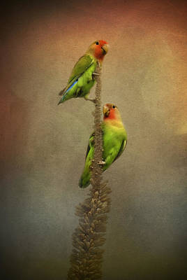 Peach-faced Lovebird Poster featuring the photograph Up And Away We Go by Saija  Lehtonen