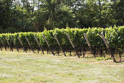 Vineyards Poster by Leslie Leda