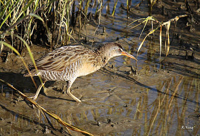 Virginia Rail Out In The Open Poster by Roena King