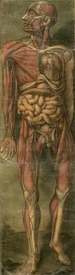 Visually Sensational Anatomical Poster by Everett