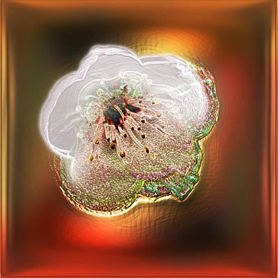 White Cherry Blossom Poster by Li   van Saathoff