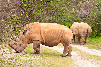 White Rhinoceros Poster by Tom Gowanlock