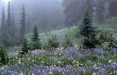 Wildflower Meadow Mt Rainier Poster by Tom and Pat Cory