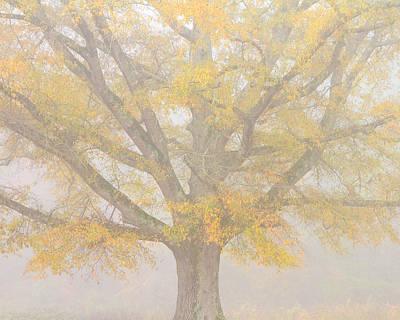Willow Oak In Fog Poster by Bill Swindaman