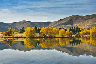 Willow Tree In Lake Tekapo Poster by Huoguangliang
