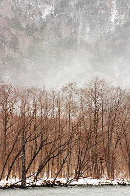 Willow Trees In Winter At Kamikochi Poster by Skye Hohmann