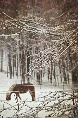 Winter Scene With Horse Grazing In Wooded Pasture Poster by Sandra Cunningham