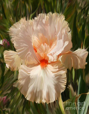 Wonderous Iris Poster by Diane E Berry