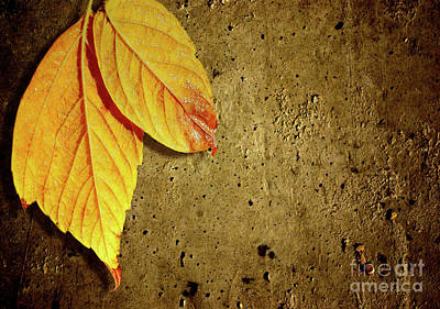 Yellow Fall Leafs Poster by Carlos Caetano
