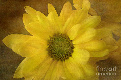 Yellow Mums Poster by Benanne Stiens