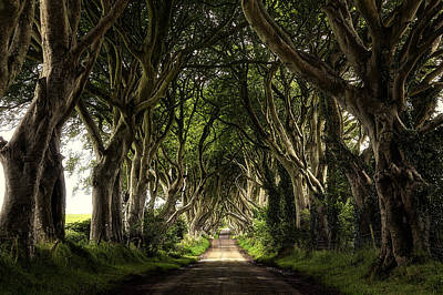 Dark Hedges Poster by Mladen Popovic