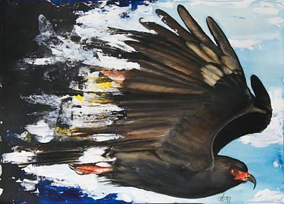 Everglades Snail Kite Poster by Anthony Burks Sr