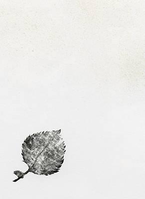 Leaf Poster by Bella Larsson
