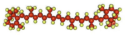 Beta-carotene Molecular Model Poster by Scimat