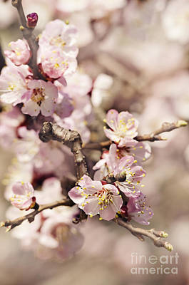 Blossom Poster by Jelena Jovanovic