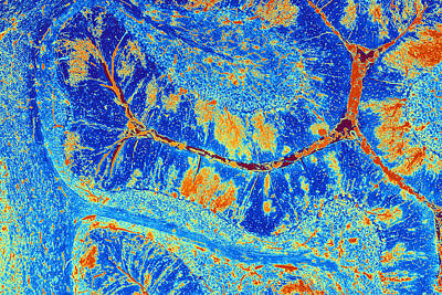 Cerebellum Tissue, Light Micrograph Poster by Pasieka