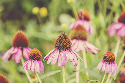 Cone Flower Poster by Scott Pellegrin