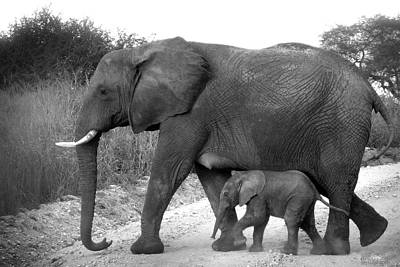 Elephant Walk Black And White  Poster by Joseph G Holland