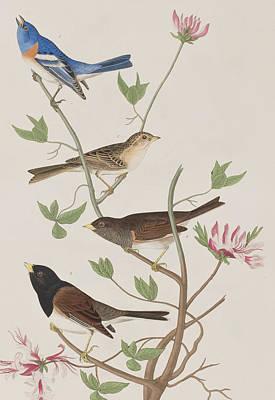 Finches Poster by John James Audubon