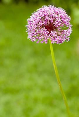 Flower Poster by Sebastian Musial