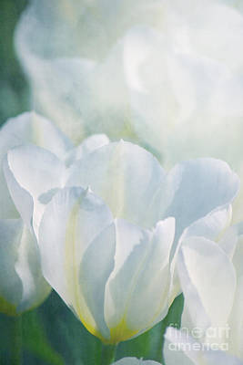 White Tulips Poster by Angela Doelling AD DESIGN Photo and PhotoArt